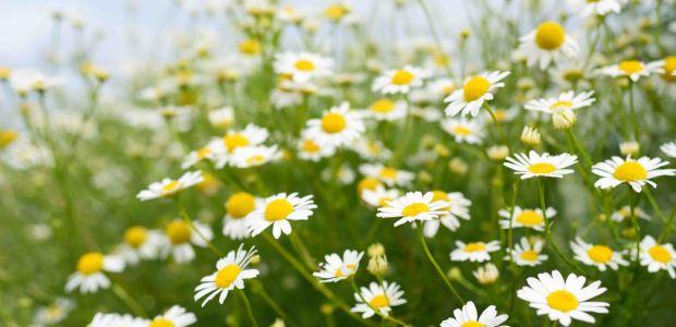 Reakcję skórną mogą wywołać różne alergeny