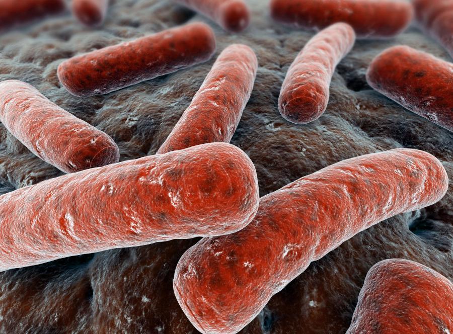 Infekcje dróg moczowych najczęściej powodowane są przez bakterię E. coli.