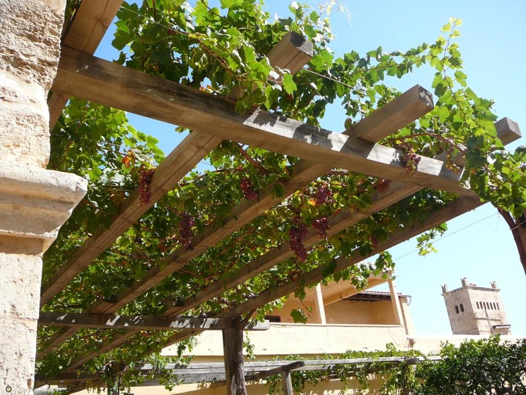 Nasz mały grecki ogród możemy wzbogacić winoroślą, pnąca się po drewnianej pergoli