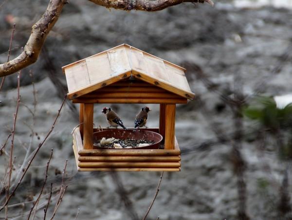 Stołówka dla ptaków