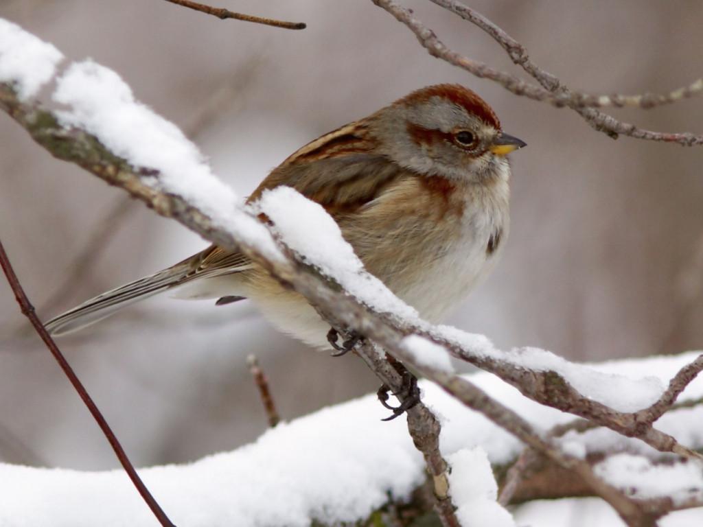 Z dokarmianiem ptaków warto zaczekać do pojawienia się pierwszego śniegu i mrozu