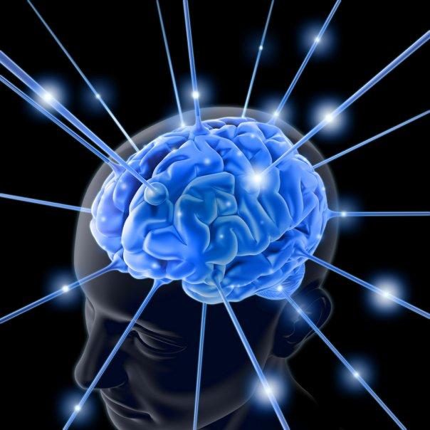 Kwasy omega 3 są niezbędne do prawidłowego funkcjonowania mózgu.