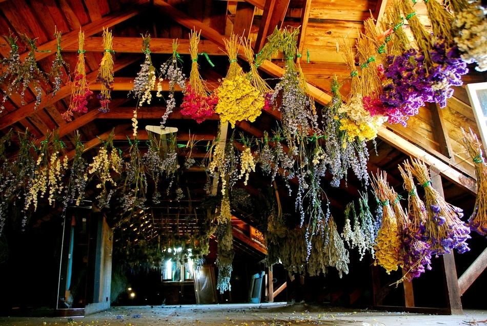 Suszenie kwiatów pod sufitem
