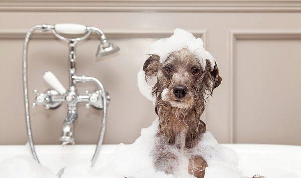 Pierwsza kąpiel szczeniaka